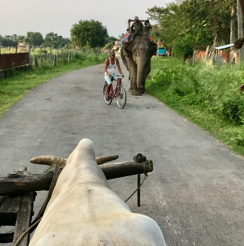 Chitwan national park, nepal with kids ox cart ride