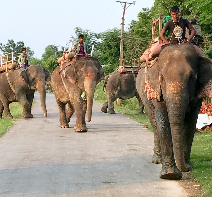 Chitwan national park, nepal with kids - elephants