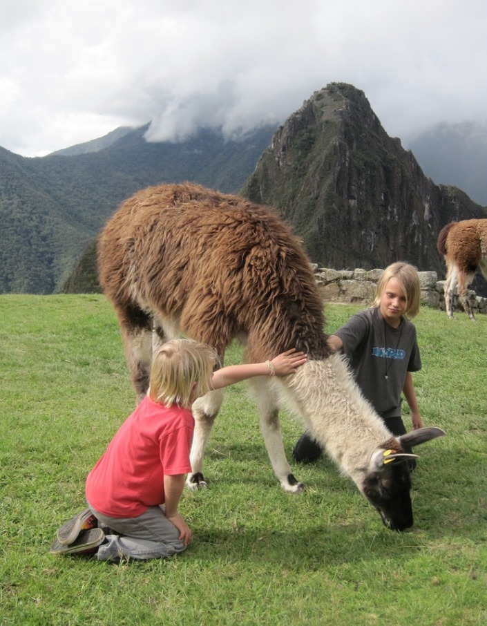 petting a llama at machu picchu, peru