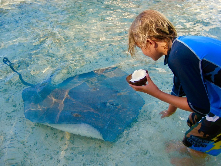 feeding sting rays swimming with sharks Moorea tahiti with kids