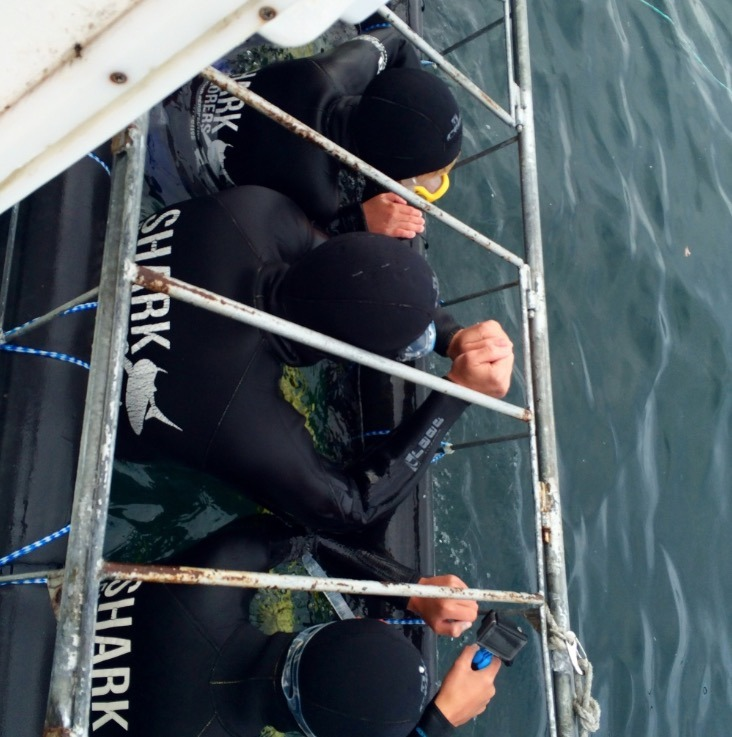 shark diving in cages in south africa kids