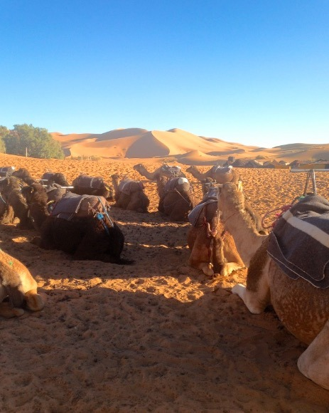 sahara desert, Morocco camping