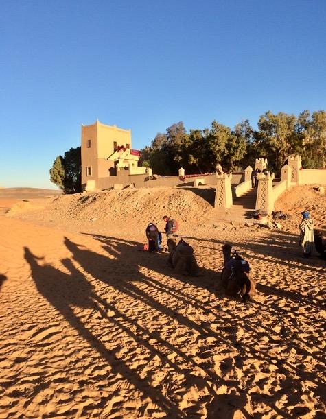 sahara desert, Morocco merzouga camels