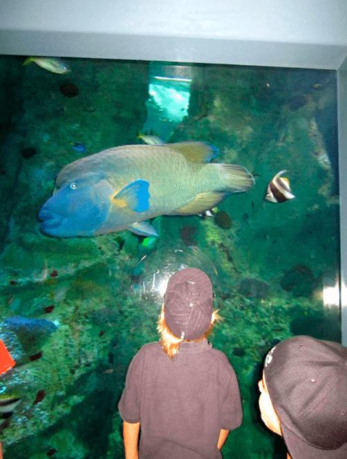 Sydney, Australia aquarium with kids