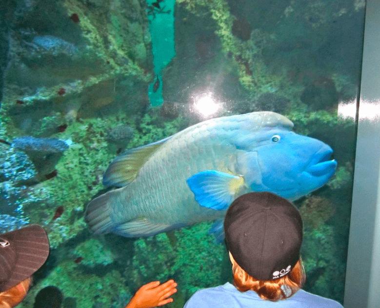 Sydney, Australia aquarium with your family