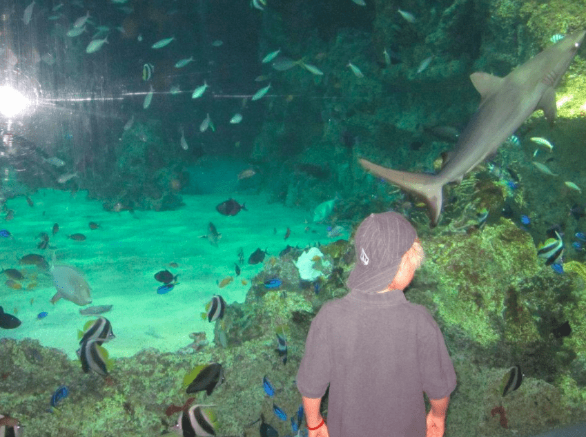visit Sydney, Australia aquarium
