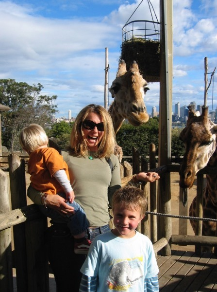 Sydney Zoo, Australia tarongo zoo giraffes