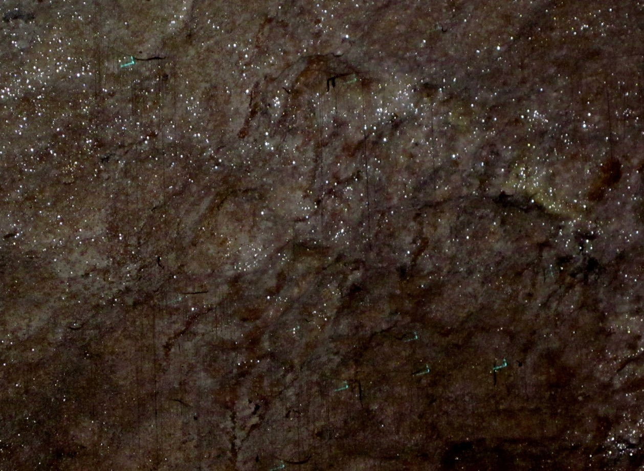 Waitomo Glowworm Caves new zealand tour