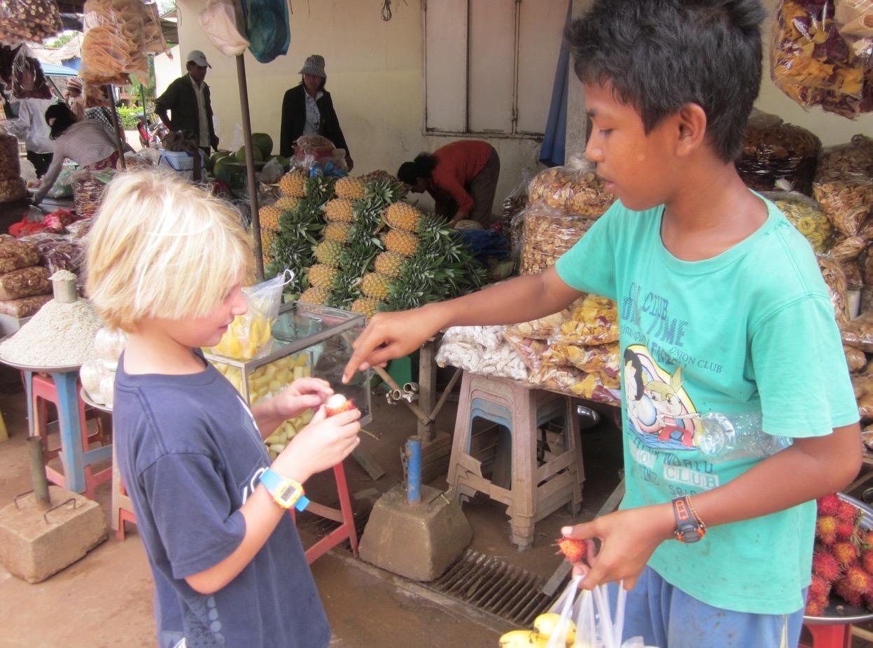 cambodia phnom penh siem reap spiders