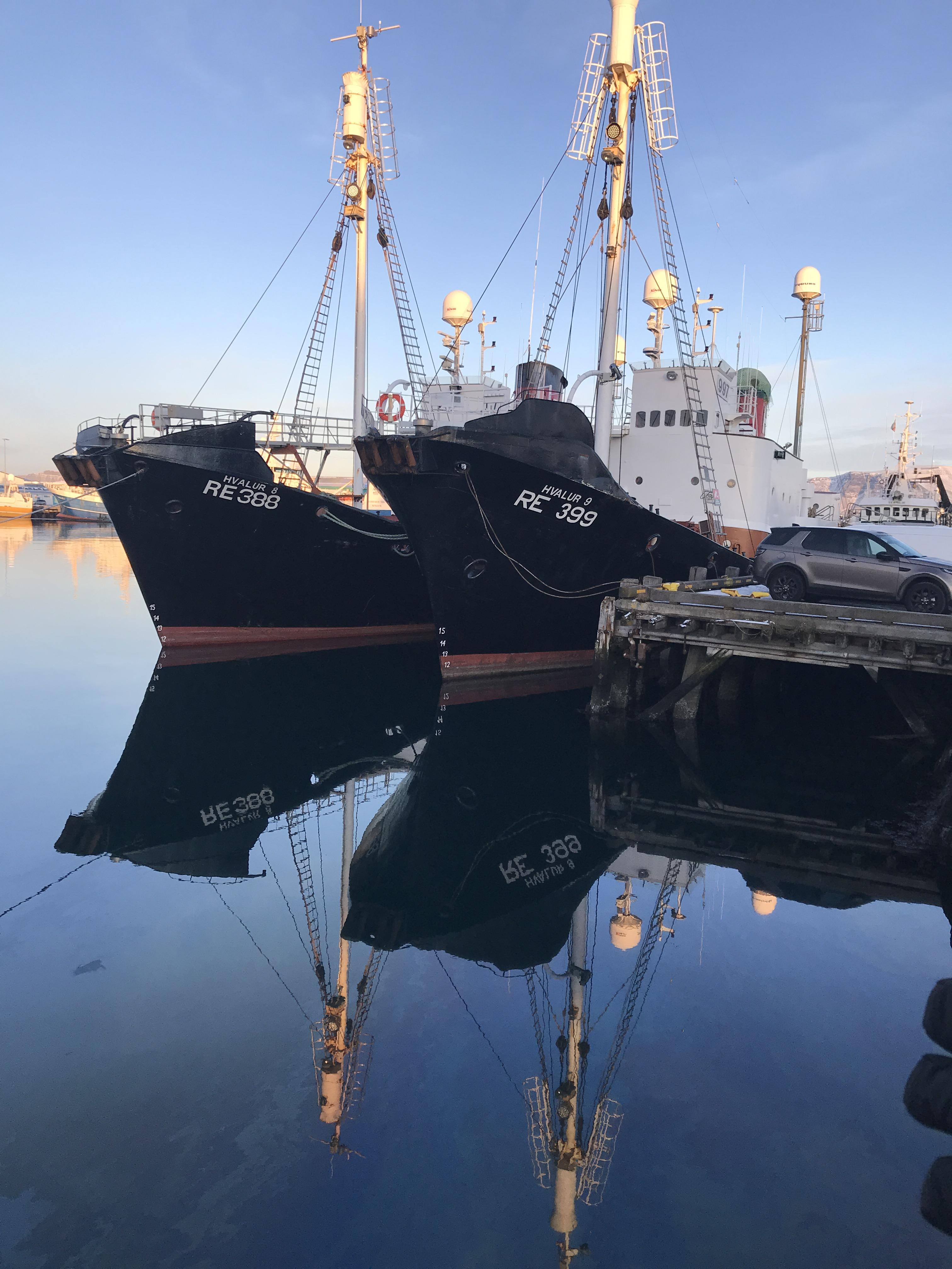 Reykjavik Iceland boats