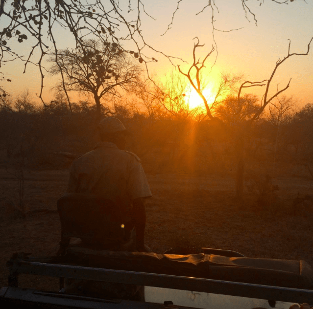 africa safari southafrica sunrise
