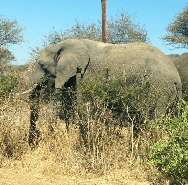 africa safari southafrica elephant
