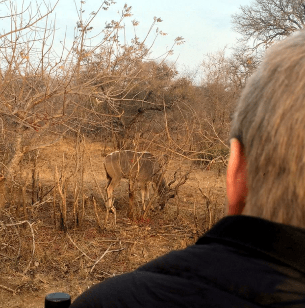 africa safari southafrica deer