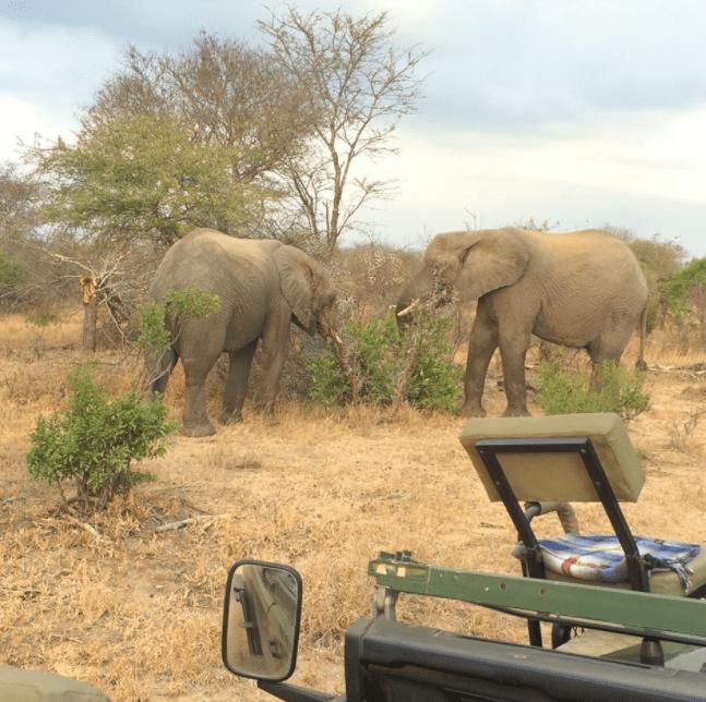 africa safari southafrica elephant family
