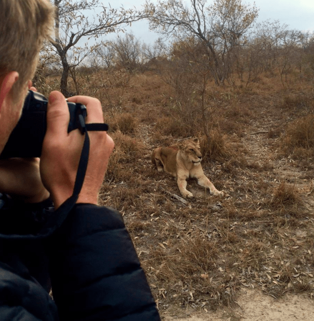 africa safari southafrica big5 lioness