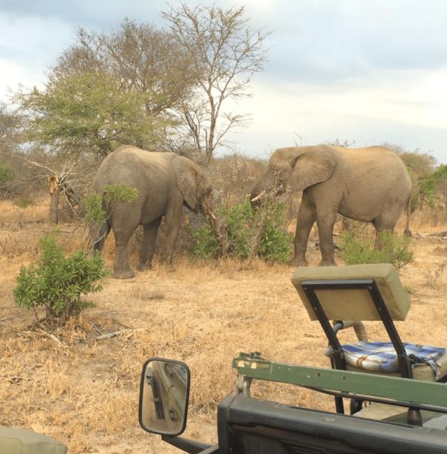 africa safari southafrica morning coffee
