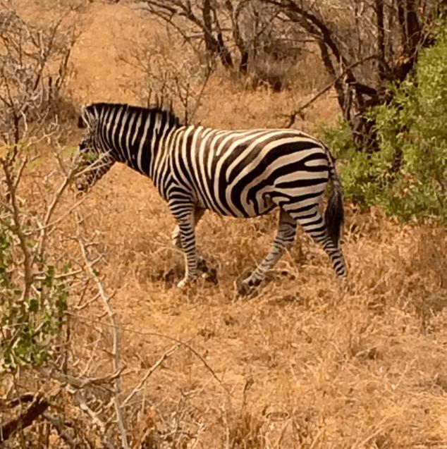 africa safari southafrica