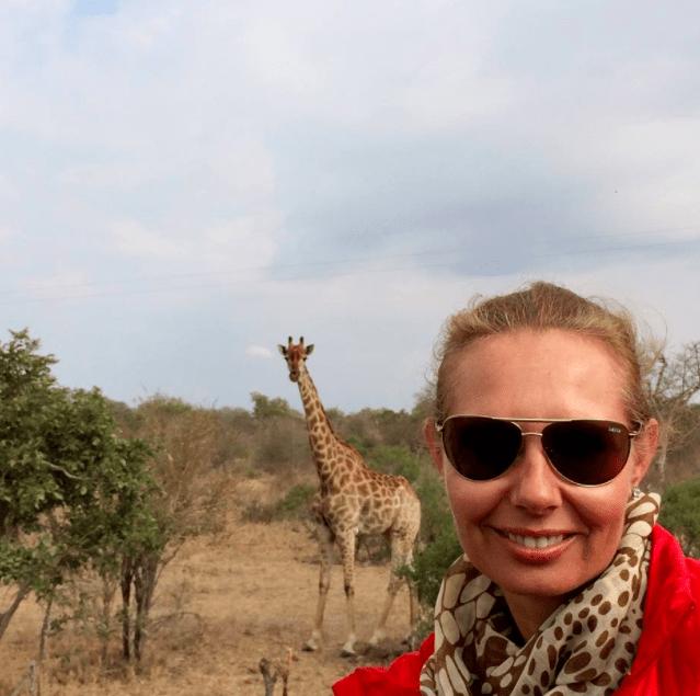 africa safari southafrica giraffe