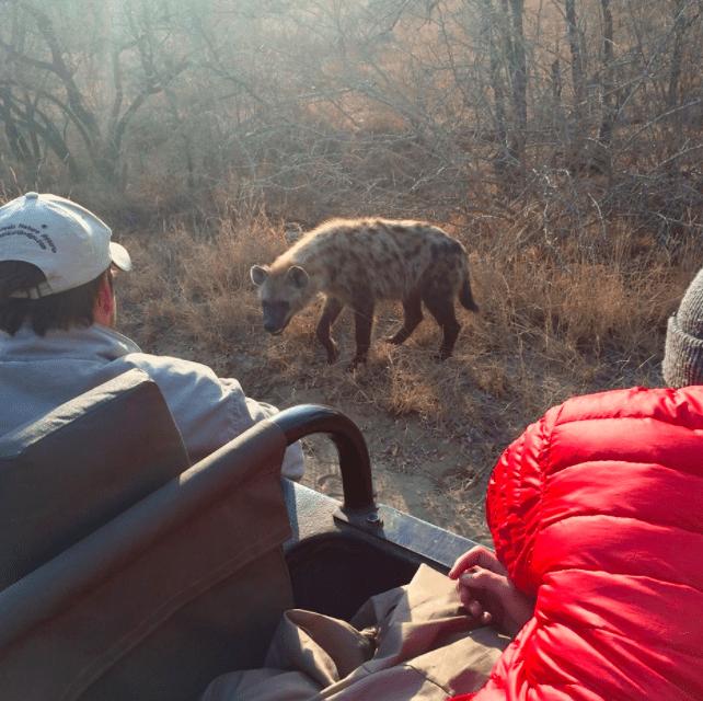 africa safari southafrica hyena