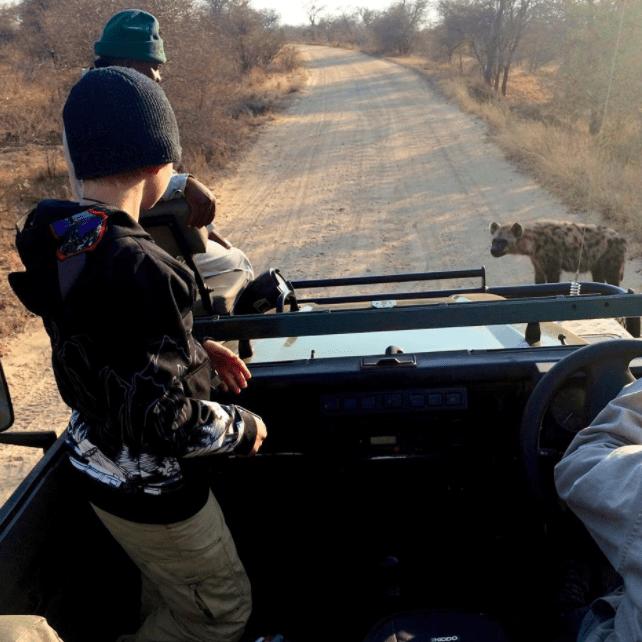 africa safari southafrica big5 hyena