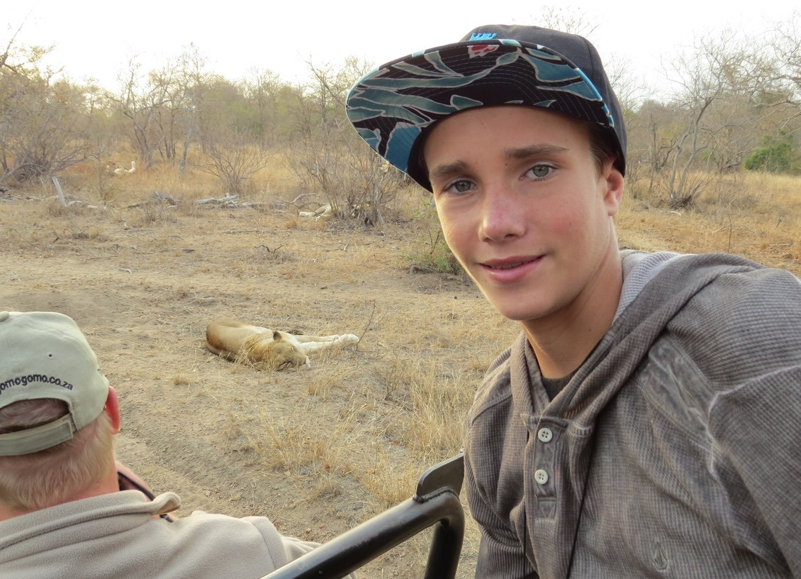 africa safari southafrica big5 lion