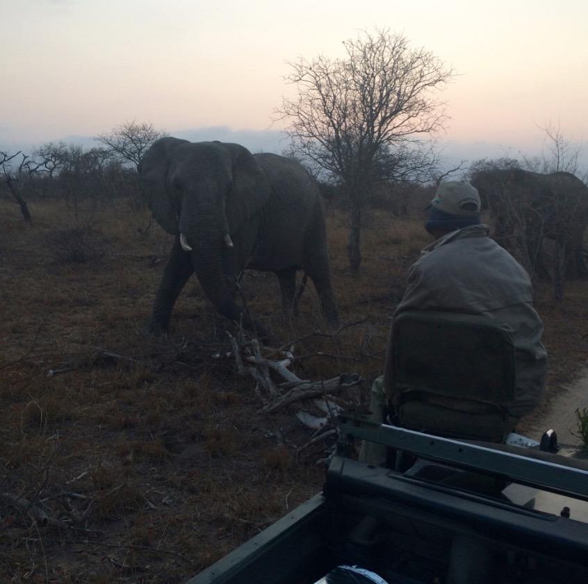 africa safari southafrica angry elephant