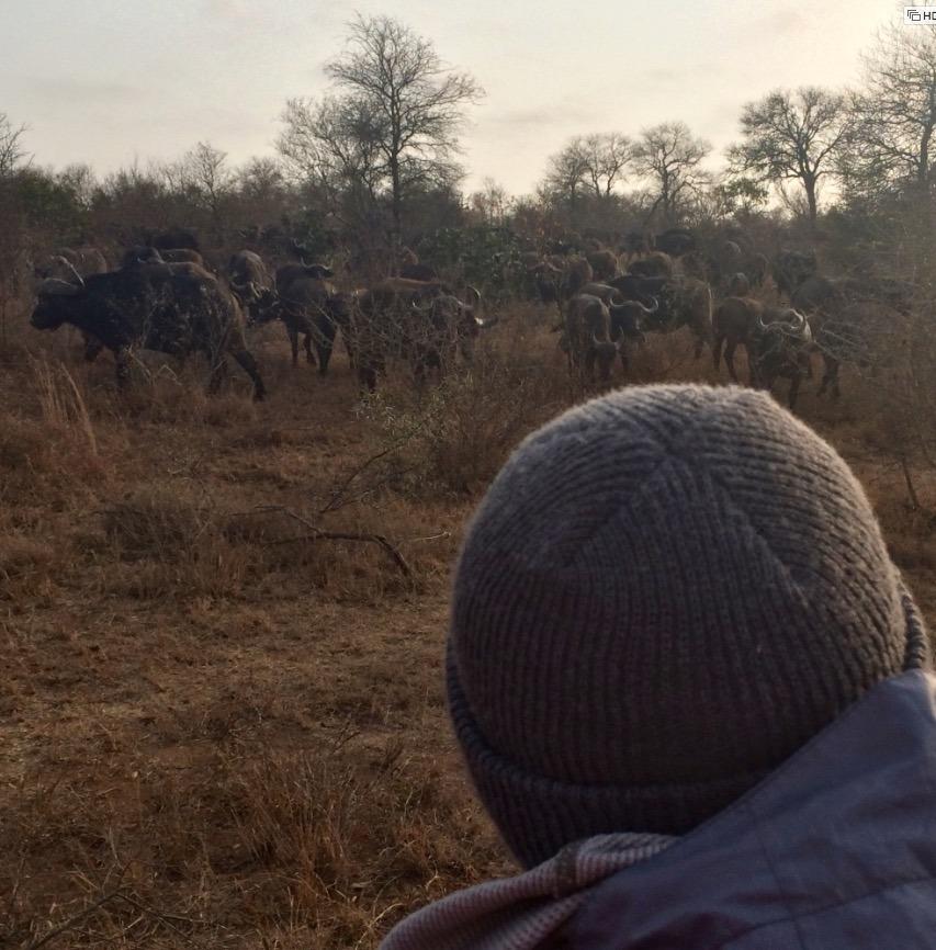 africa safari southafrica sunrise
