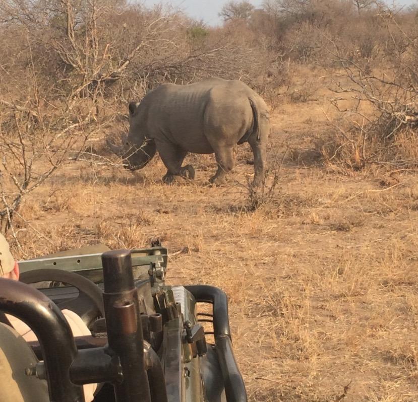 africa safari southafrica rhino