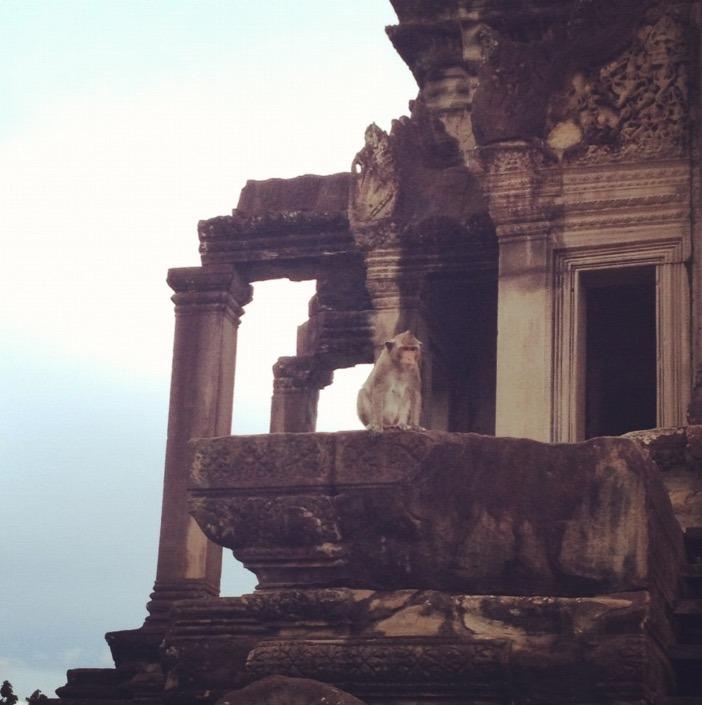 cambodia siem reap angkor wat monkey