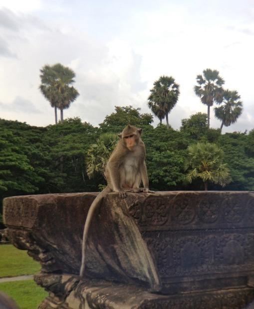 cambodia siem reap angkor wat