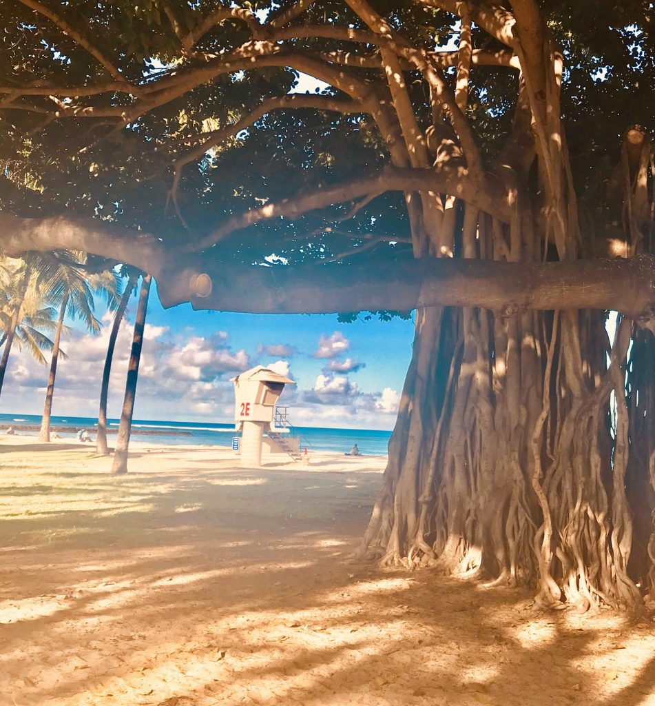 banyan tree hawaii oahu
