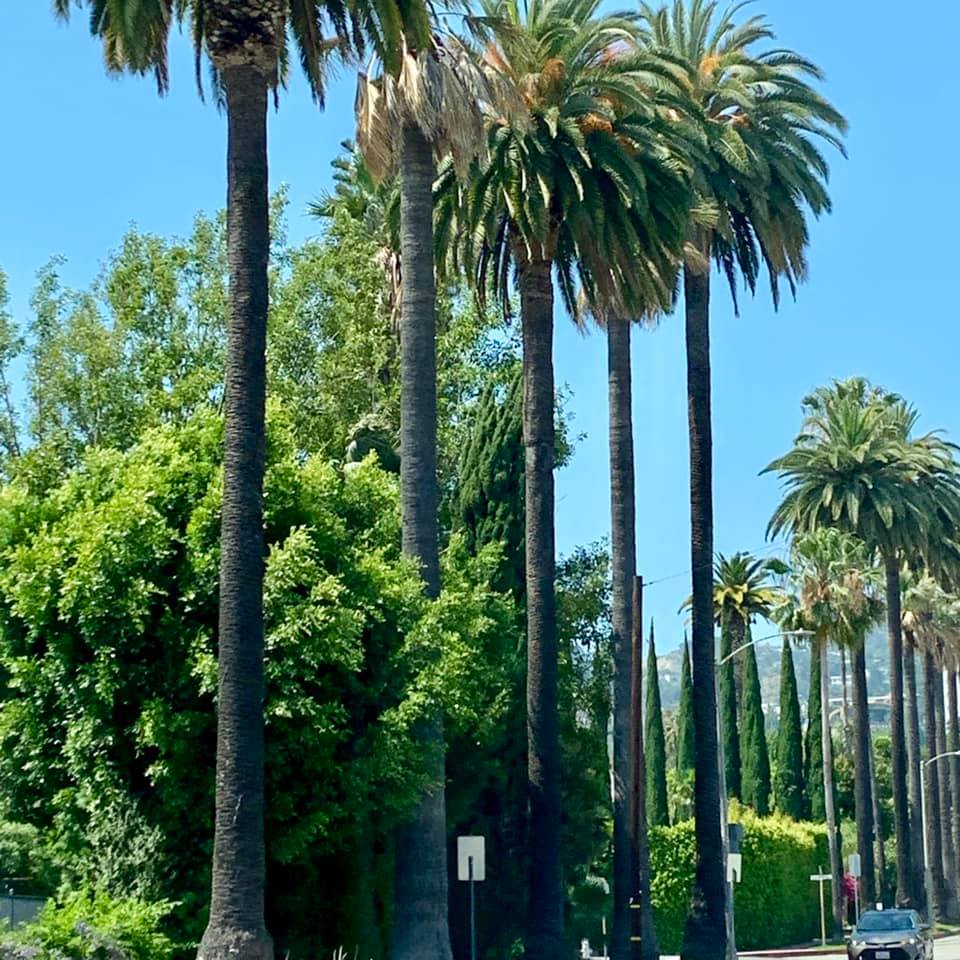 palm trees in beverly hills and 8 fun things to do in los angeles this summer