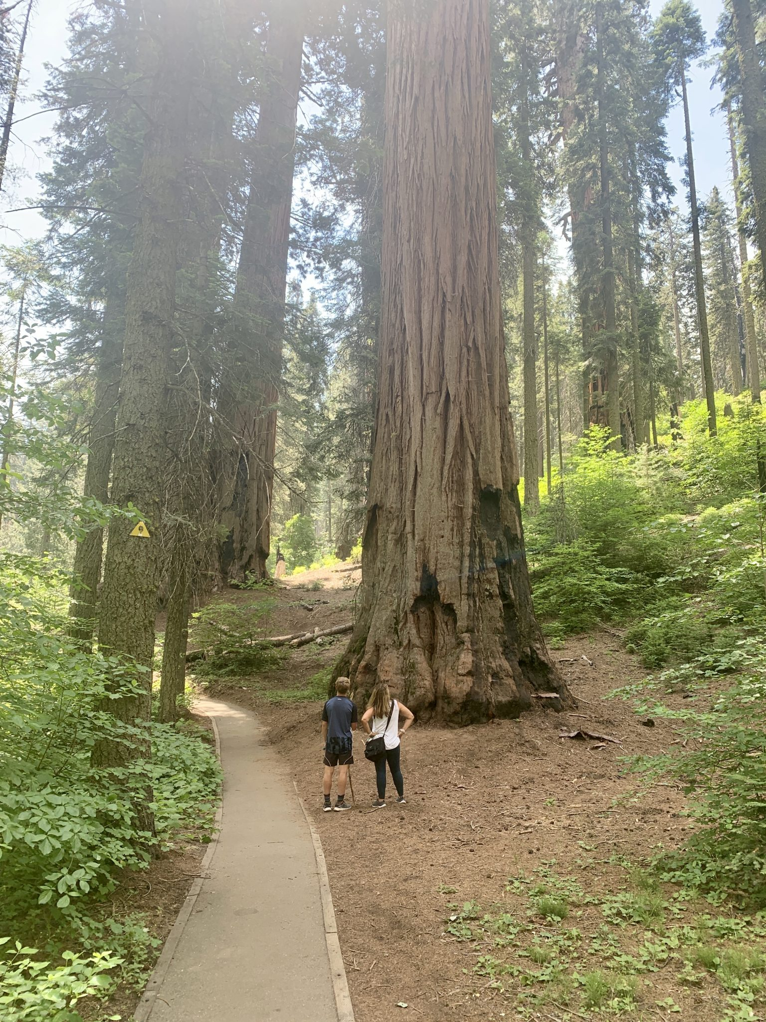 hiking around sequoia national park with kids