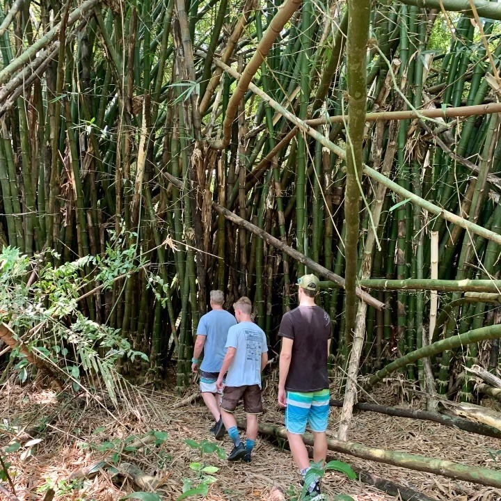 bamboo in belize